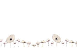 Mushroom wallpaper pattern for devices