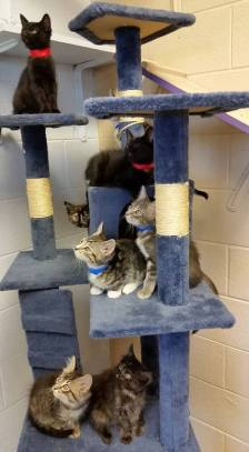 cats at shelter