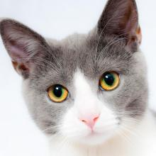Browse adoptable cats