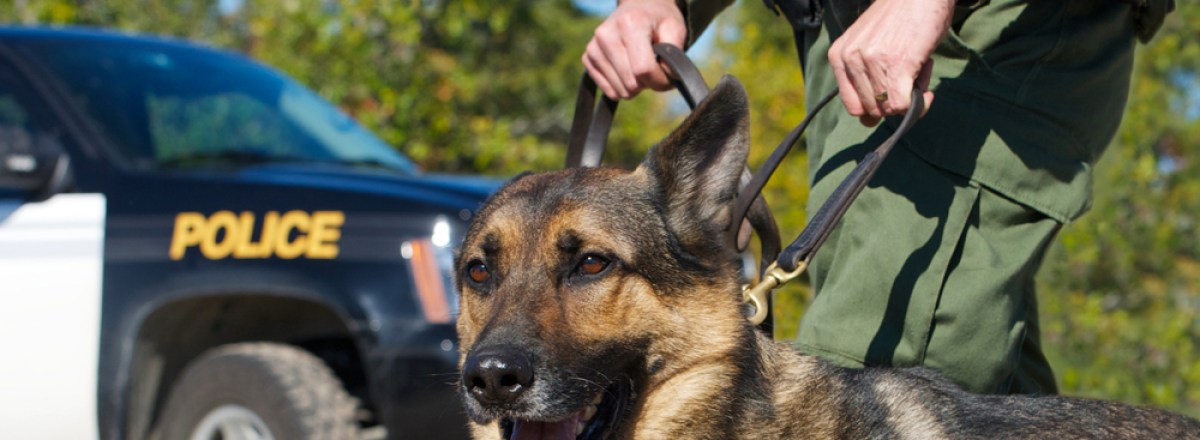 The U.S. Supreme Court Considers Dog Sniffs and the Fourth Amendment