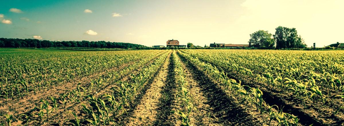 """""""Factory Farming"""": An Evolving Phrase"""