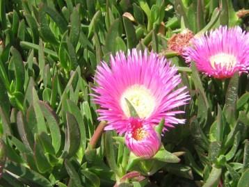 flor-ecollavor