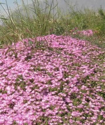flores-eco-334
