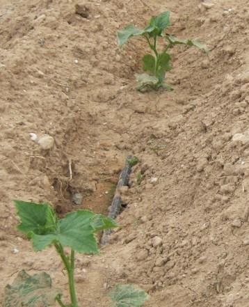 pepino-slide-ecologico-04