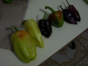 pimiento-color-5
