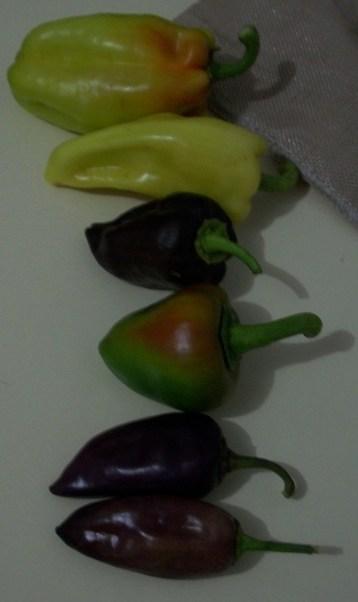 pimiento-color-6