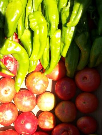 pimiento-italiano-tomate-povedilla