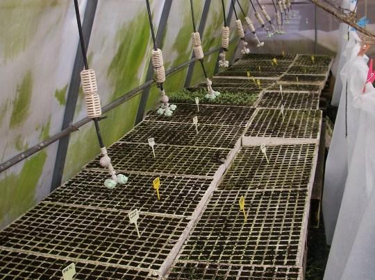 plantones-invernadero