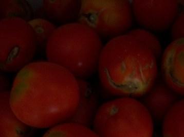 tomate-pera-222