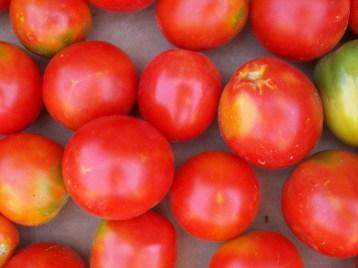 tomate-pera-6