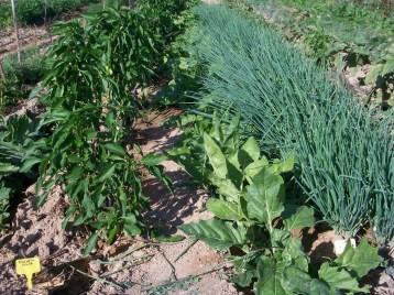 verduras-ecologicas-de-otono-100_3464