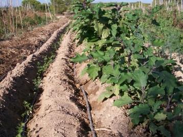 verduras-ecologicas-de-otono-100_3473