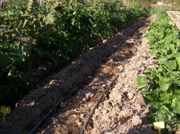 verduras-ecologicas-de-otono-100_3480