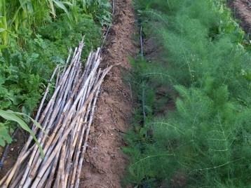 verduras-ecologicas-de-otono-bacarot-alicante-100_3773-2