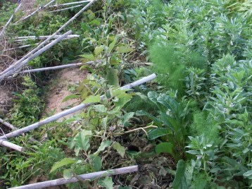 verduras-ecologicas-de-otono-bacarot-alicante-100_3833-2
