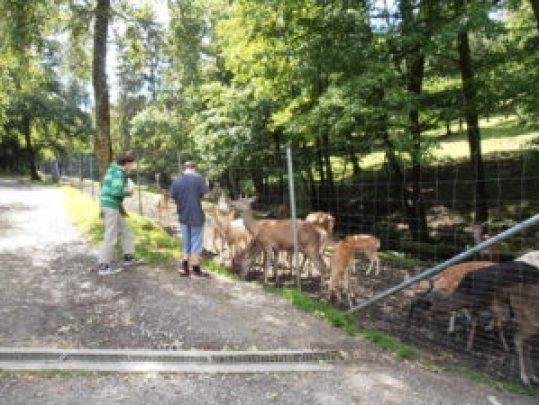 Zuerst geht es zu den Tieren, die auf Futter warten und die von uns reichlich Futter bekommen.