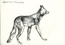 Hyänenhund