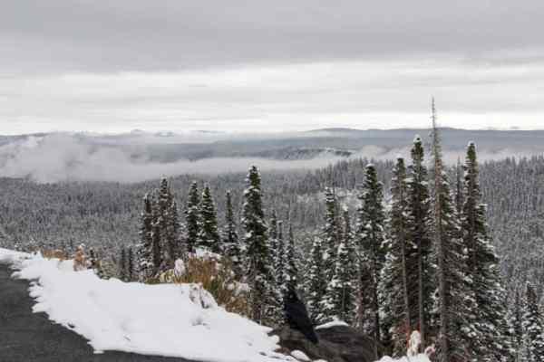 Yellowstone in de Sneeuw