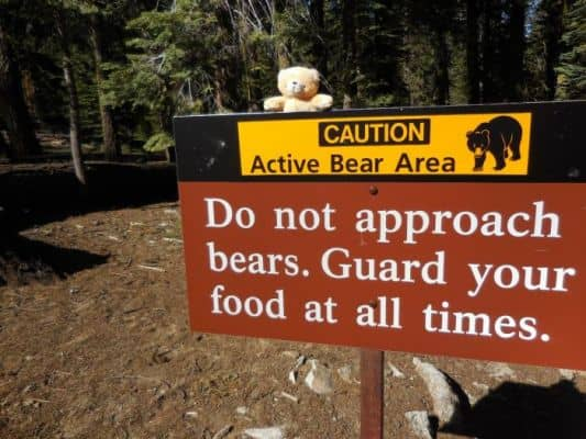 bear-sign-sequoia