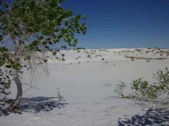 White Sands 03