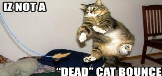 market-dead-cat-bounce-feature2
