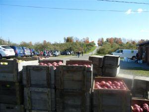 Heath Orchard ThanKsgiving