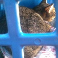 Viagens longas com gatinhos