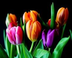 bloei bloemen