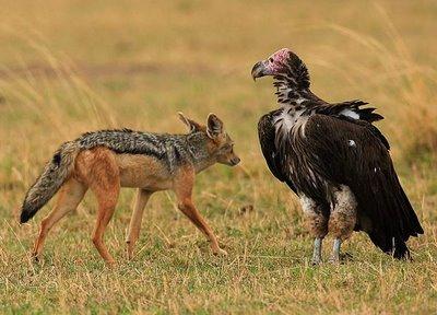 Sciacalli ed avvoltoi