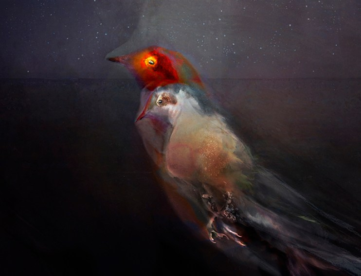 A ghostly bird floating in the night sky