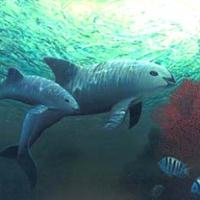 Vaquita (Rare Animal; Undangered)