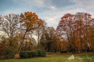 Altdöbern_Herbst (8)
