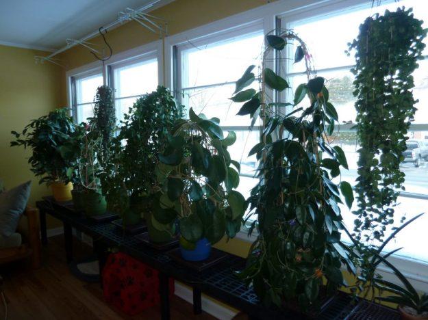 Living Room Plants December 2014