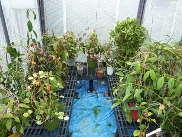 Tent greenhouse 091215