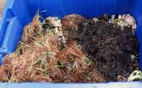 Build A Worm Compost Bin