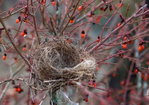 empty_nest_by_muffet