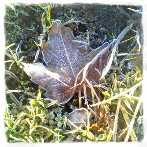gilt-edged leaf