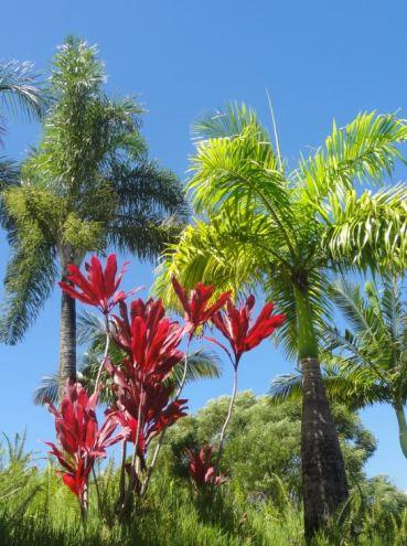 Hawaii Maui - Voyage de noces P