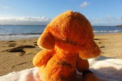 Hawaii Maui - Voyage de noces ZZF