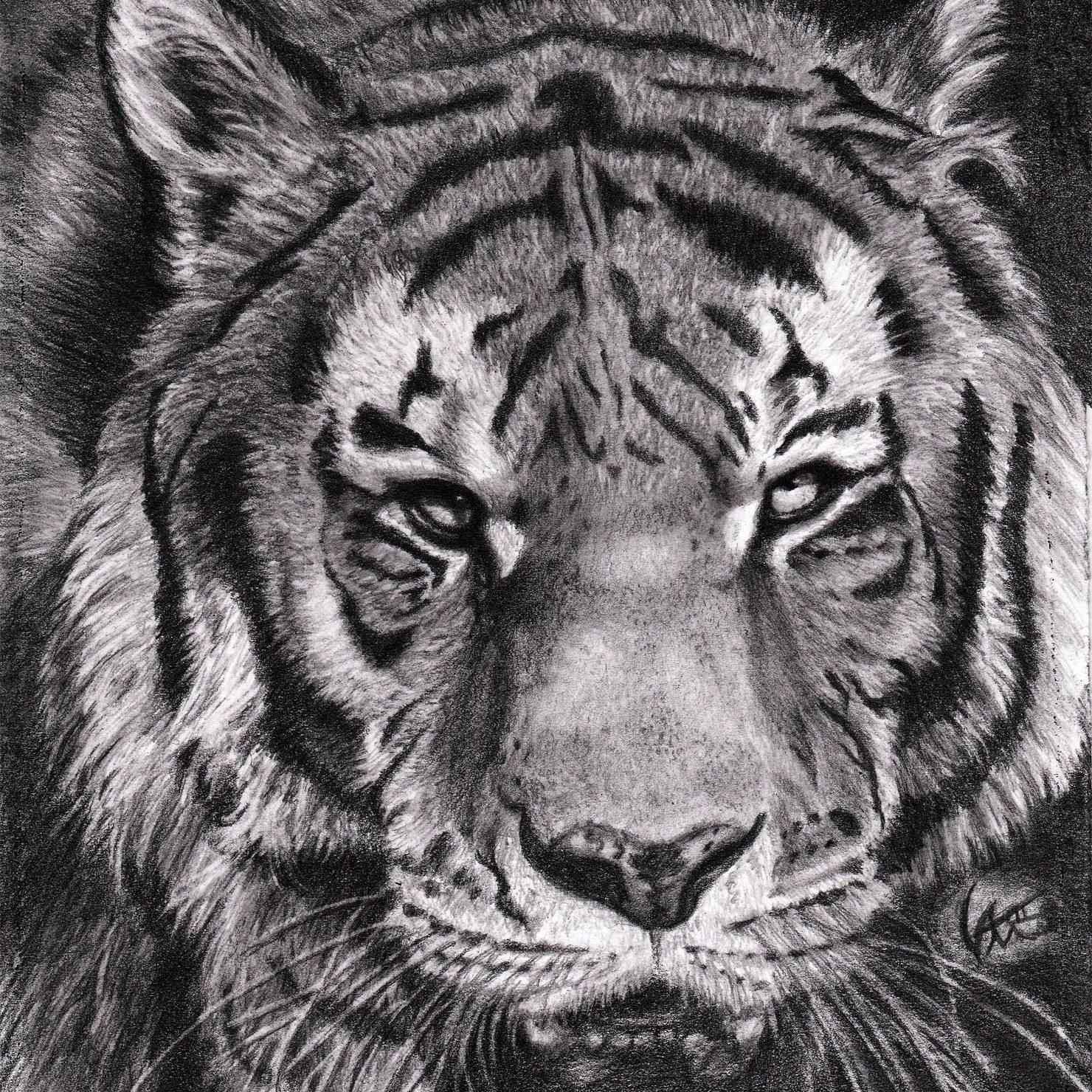 Tiger Finished