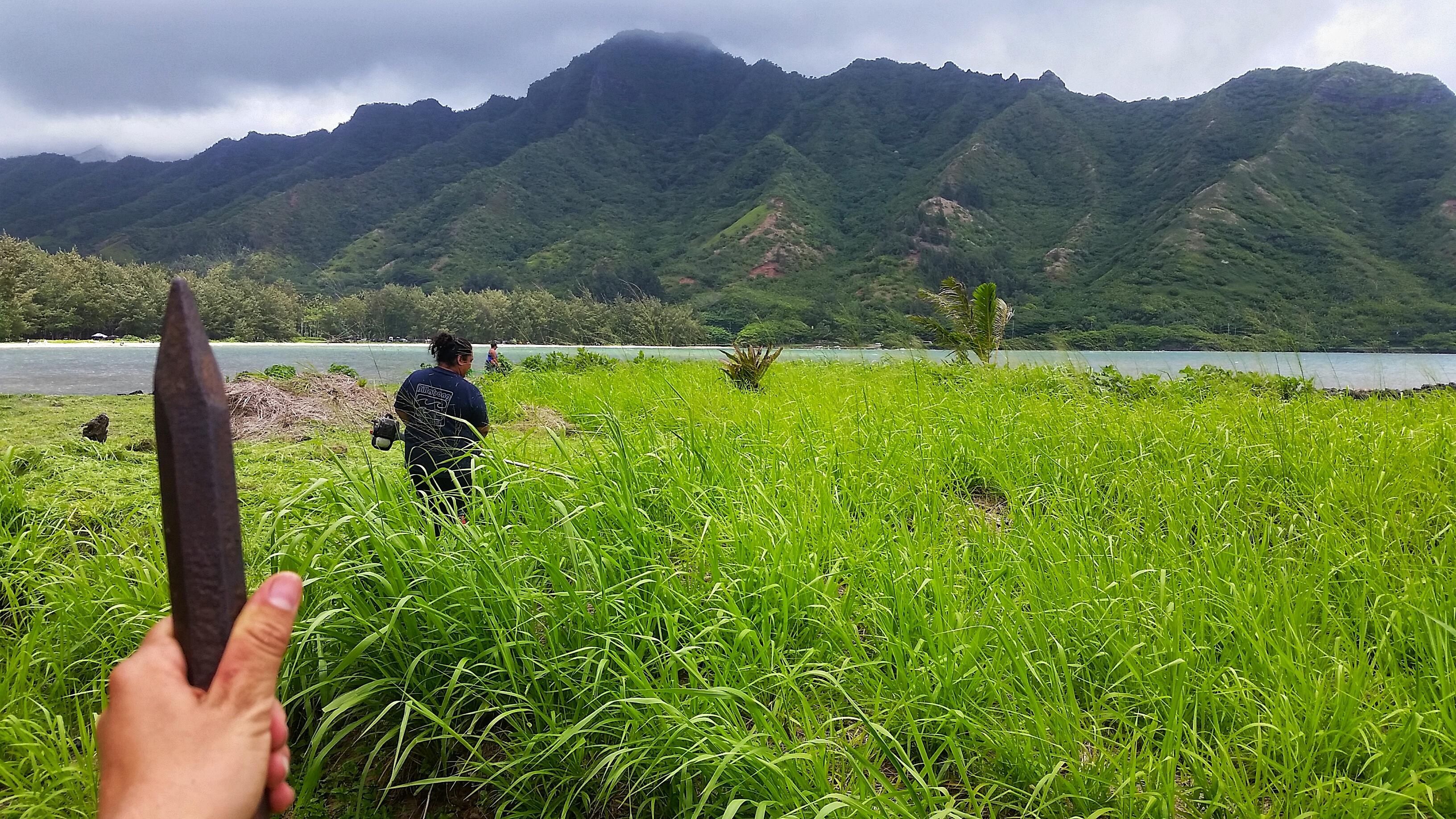 Community Workday at Huilua Fishpond in Kahana