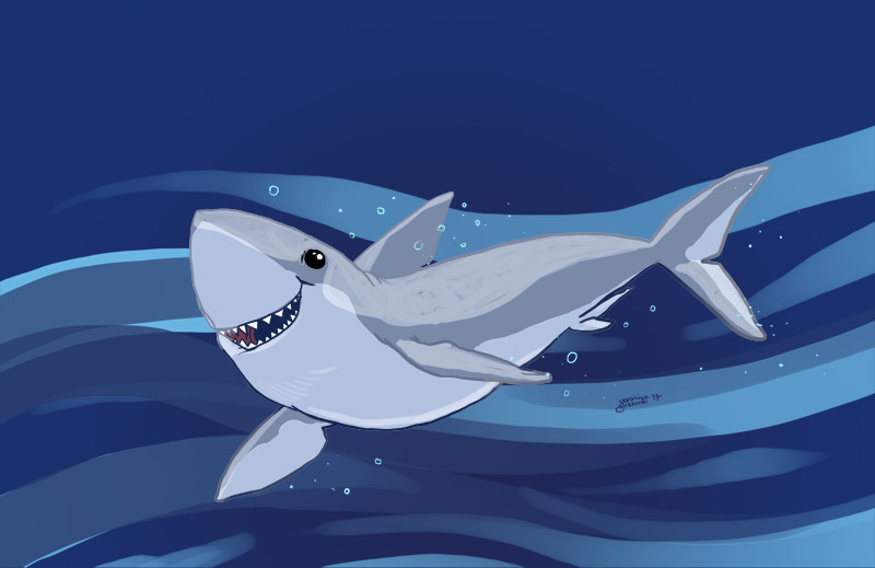 30-Minute Doodle— Shark