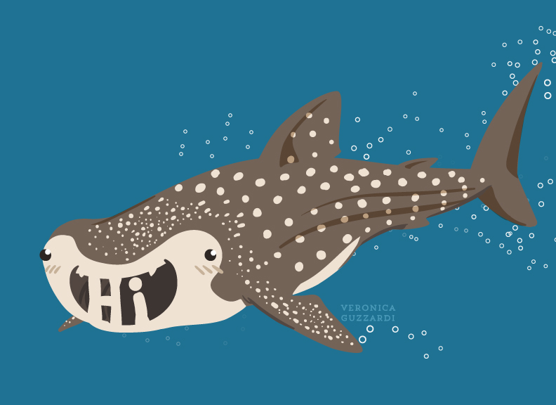 "Whale Shark ""Hi"""