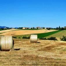 camminofrancigeno-colline