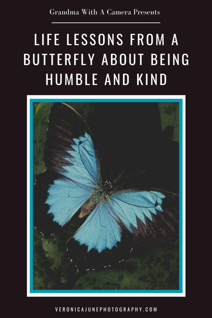 PIN image with butterfly and title about being kind