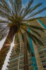 Palm tree in Florida with starburst using aperture
