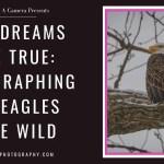 Ad Image for Bald Eagle Post