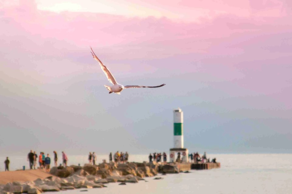 A seagull flies over the Pier at one of Holland's beaches