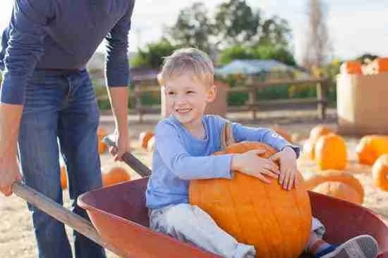 a boy gets a ride in a wheelbarrow in a pumpkin patch for a fall photoshoot