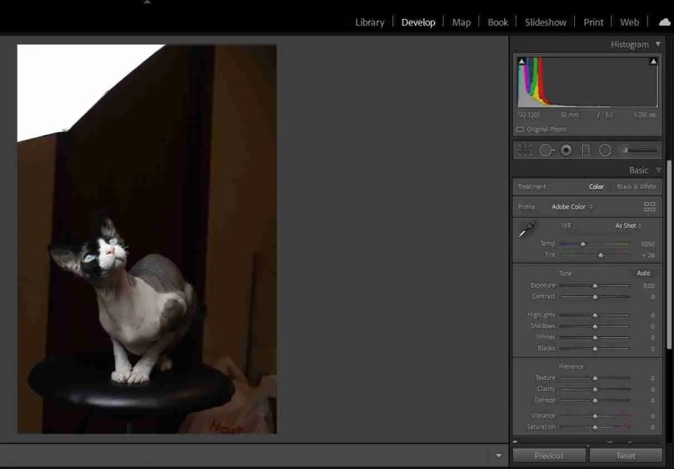 Calculating exposure helps avoid clipping as shown in this image of a cat with a bright white light in the upper left corner of the image